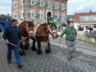 Trekpaarden passeren de revue op de Vette Veemarkt