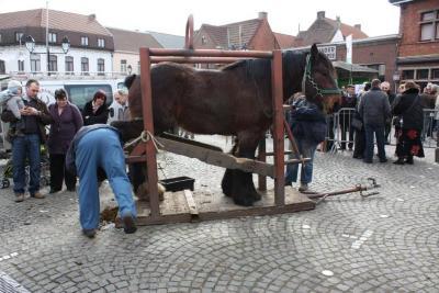 Een hoefsmid beslaat een trekpaard