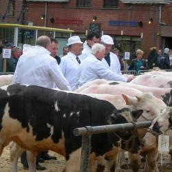 Keurders keuren vet vee