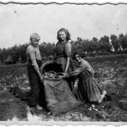 Knesselaarse landbouwers