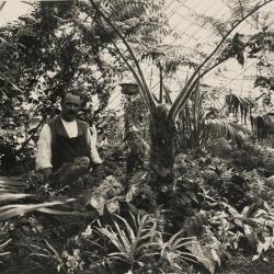 In de serre boven het koetshuis van Villa Pinehurst, jaren 1920