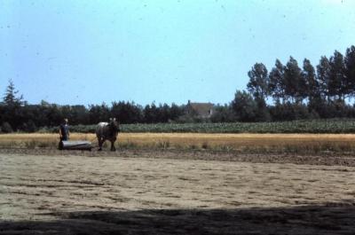 Rollen van het veld, Waarschoot, jaren 1960