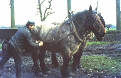 Inspannen van de paarden, Waarschoot, jaren 1960