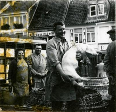 Biggen verhandelen op de varkensmarkt van Eeklo