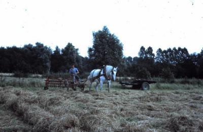 Hooien op het veld, Waarschoot, jaren 1960