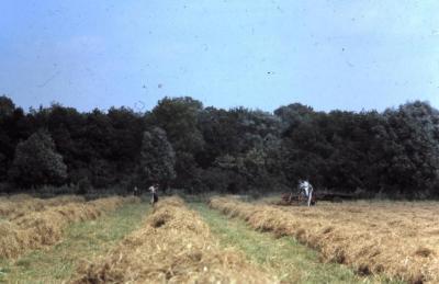 Hooien op het veld in Waarschoot, jaren 1960