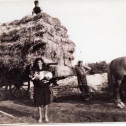 Agnes Boelens op het graan, Bassevelde