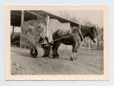 Paard met rol