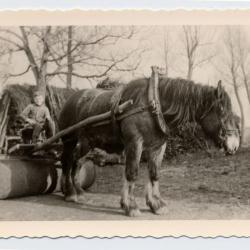 Paard met pletrol