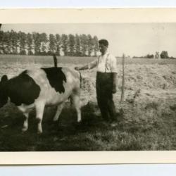 Ploegen met paard, Lindeken, Evergem