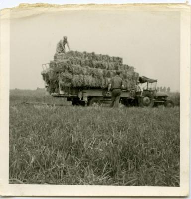 Hooi binnenhalen met de tractor