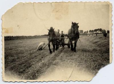 Pikbinder getrokken door paarden (1), Zelzate