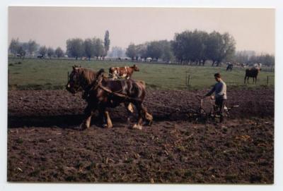 Ploegen met paard en kar, Assenede