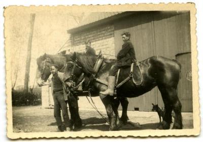 De werkpaarden van de familie Van Den Hende, Kaprijke