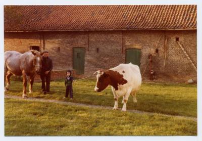 Luc Van Bastelaere en koe Cora (1), Evergem