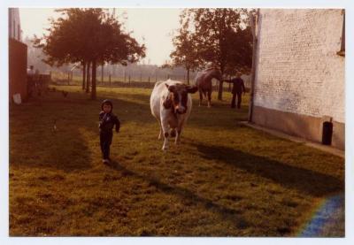 Luc Van Bastelaere en koe Cora (2), Evergem