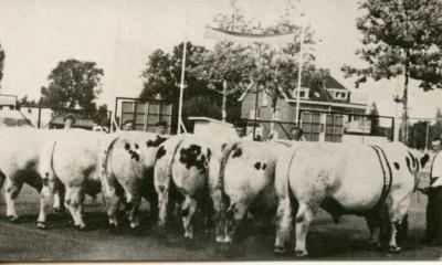 Stierenkeuring Brussel (?), 1965 (2)
