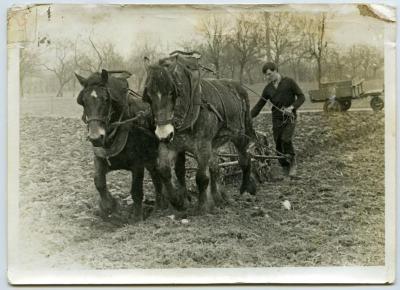 Laatste keer ploegen met paard en kar (III)