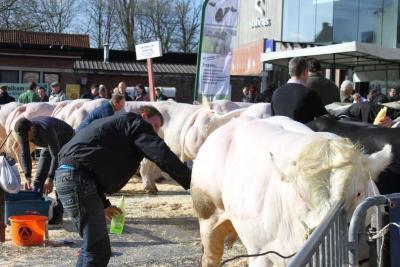 Vet vee proper maken op de Vette Veemarkt, 2014