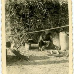 Emiel De Bruycker bij zijn werkpaard