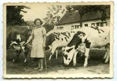 Simon Verdonck bij de koeien