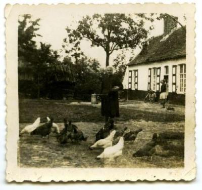 Kippen op het erf