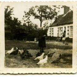 Maïshakselaar New Holland van de familie Busschaert