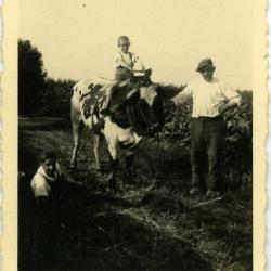 Laatste keer ploegen met paard en kar (II)