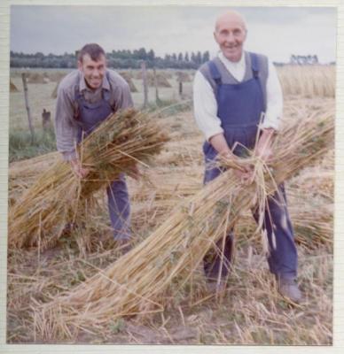 Familie De Coninck oogst (V)