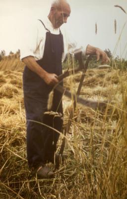 Familie De Coninck oogst (II)