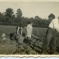 Ploegen met de os, Lembeke, 1930-1940