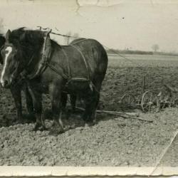 """""""Schoven"""" binden op het land in Sleidinge, 1933"""
