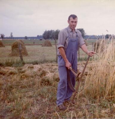 Familie De Coninck oogst (IV)