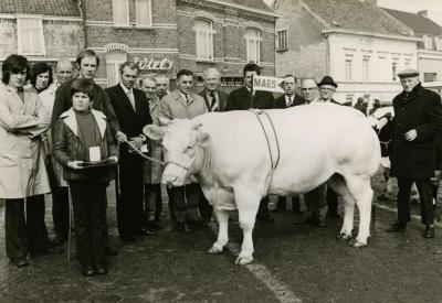 Prijsstier, Zomergem, 1970-1980