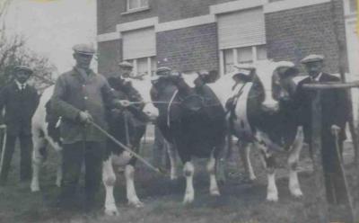 Prijsdieren, Zomergem, 1930