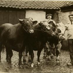 Winnend dier, Zomergem, 1930-1970