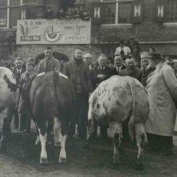 Winnende koe, Zomergem, 1970-1980