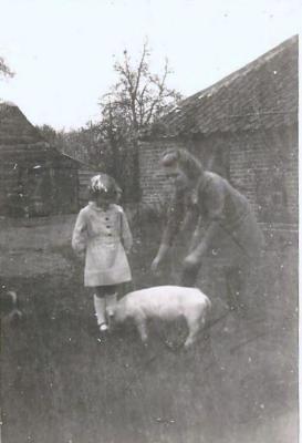 Maria Van Maldeghem met tam varkens, Aalter, 1940-1945