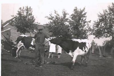 Victor Van Maldeghem met koeien, Aalter, 1940-1942