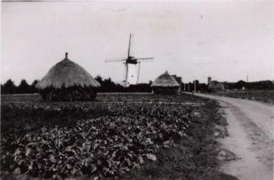 Witte Molen, Knesselare, 1938