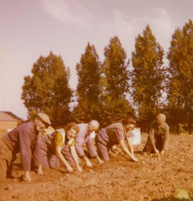 Aardappelrapers