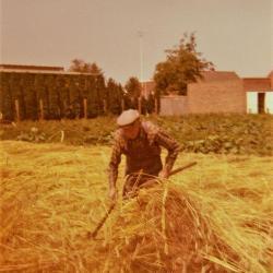 Boerenwerk, oogsten in de jaren 50